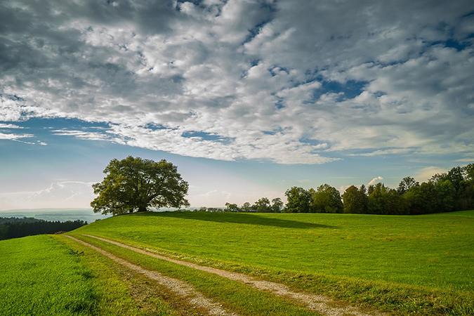 Landschaftsfoto eines Feldwegs auf einer Wiese an einem Baum vorbei unter wolkigem Himmel